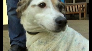 Doggy Jackets For Cold Canines - Video