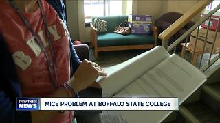 Mice infestation at Buffalo State College apartment - Video