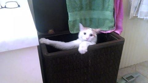 Funny Cat Gets Stuck In The Laundry Basket