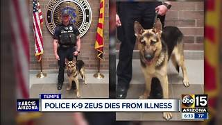 Police K-9 Zeus dies from illness - Video