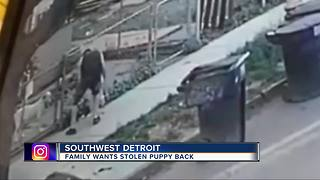 Family hopes surveillance video will lead to man who stole their dog - Video