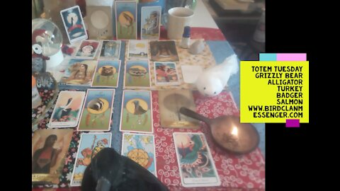 Totem Tuesday Medicine Card Reading - Grizzly Bear, Alligator, Turkey, Badger, Salmon - and Frens