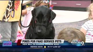 Senator wants stricter laws for service pets - Video