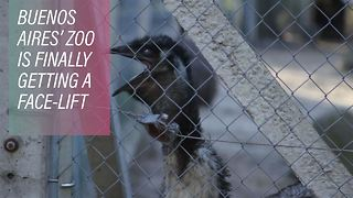 Revitalizing the squalid Buenos Aires zoo - Video