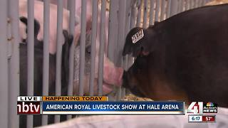 American Royal Livestock Show at Hale Arena - Video