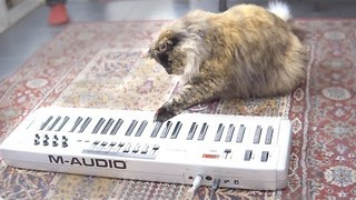 Cats Try to Play Laser Piano - Video