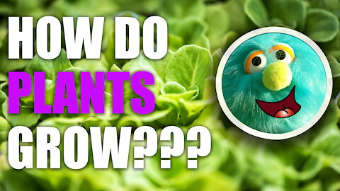 Science of Photosynthesis: How do Plants Grow?