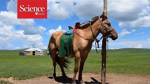 Sacrifice of ancient horses gives clues to their domestication
