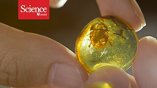 Fossils in amber offer an exquisite view on dinosaur times—and an ethical minefield