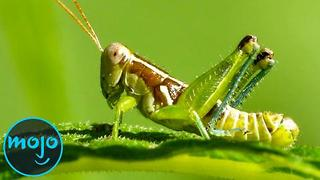Top 10 Bugs Humans Can Eat - Video