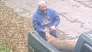 Man caught on camera dumping dead deer - Video