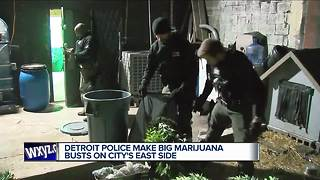 Detroit police make big marijuana busts on city's east side - Video