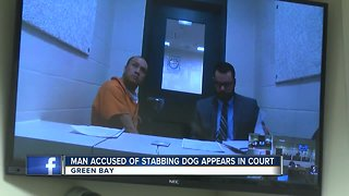 Man accused of stabbing dog appears in court