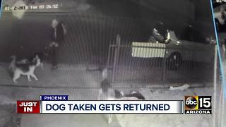Dog taken on camera in Phoenix returned home - Video