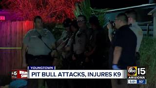 MCSO deputy shoots, kills dog during attack - Video