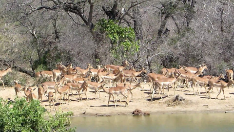 Incredible variety of African wildlife visit waterhole