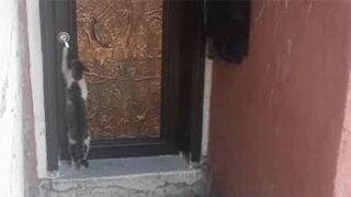 Polite cat knocks on door before entering house