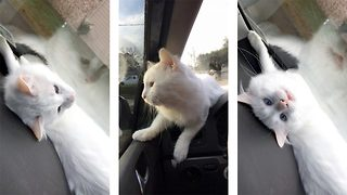 Adorable Kitty Falls In Love With Windscreen Wipers - Video