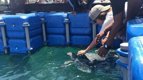Australian conservationist releases endangered turtle from captivity in Indonesia