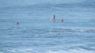 Dolphins share waves with surfers off South African coast - Video