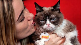 Internet Famous Grumpy Cat Passes Away At 7-Years-Old
