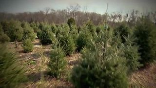 Christmas tree shortage anticipated this holiday season - Video
