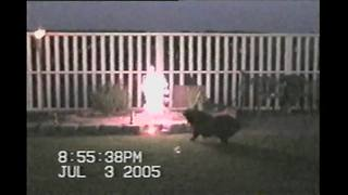 "Dog ""attacks"" lit fireworks on the 4th of July - Video"