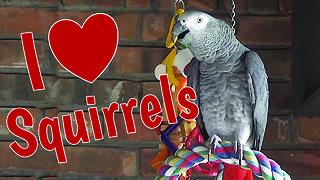 Parrot sweet talks the backyard squirrels