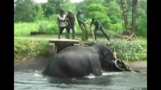 Elephant rescued from canal in Sri Lanka