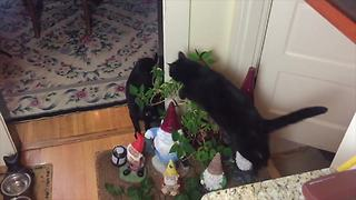 Cat is obsessed with jumping over objects
