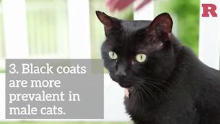 Facts to know about black cats | Rare Animals - Video