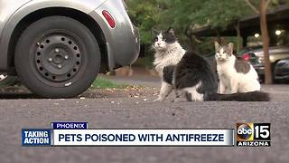 Police investigating possible pet poisoning in Phoenix - Video