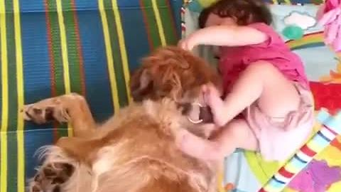 Baby plays with her very patient doggy