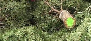 Warning about real Christmas trees
