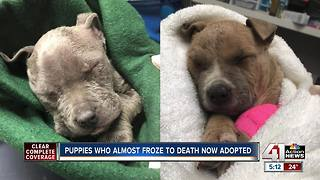 Puppies who almost froze to death now adopted - Video