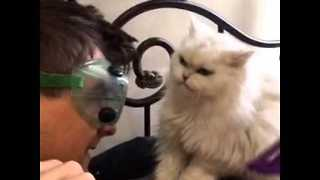 Cookie the Cat Clearly Doesn't Like to be Brushed - Video