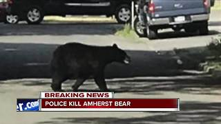 Amherst Police euthanize the 'Amherst bear'