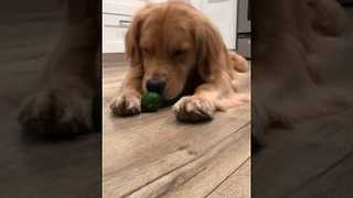 Life of a Cute Pup - Video