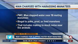 Splashing near mating manatees puts Florida man in hot water
