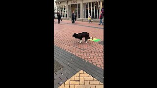 Talented doggy shows off street performing tricks