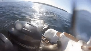 Seal Hops on Boat to Escape Orca Hunt - Video