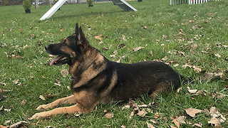 Lorain police training K-9s with new material - Video