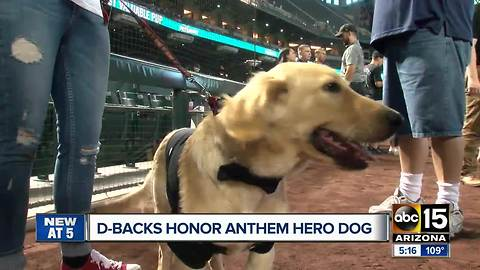 Diamondbacks honor hero dog at baseball game