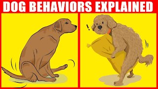 The Meaning Behind Strange Dog Behaviors