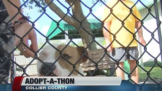 Adopt-A-Thon Collier County - Video