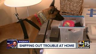 Drug sniffing K-9s discover if your loved ones are doing drugs - Video