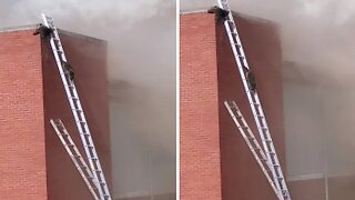 QUICK THINKING FIREFIGHTERS SET UP LADDERS SO RACCOON PAIR CAN RESCUE THEMSELVES FROM FIRE