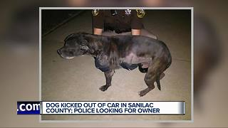 Dog thrown from vehicle in Sanilac County, police looking for suspect - Video
