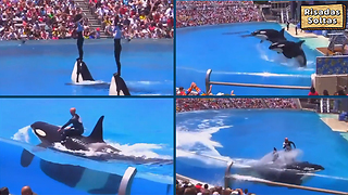A phenomenal spectacle with orca whales - Video