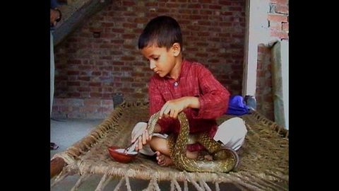 Kid Friends With Poisonous Snake